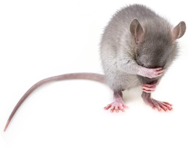 Comment choisir les meilleurs pièges à souris : conseils